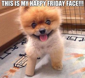cute-dog-friday-face