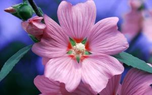 4206977-pick-a-flower